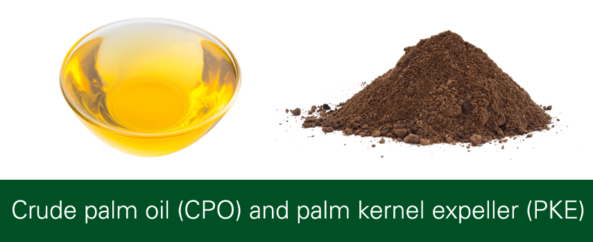 Palm Oil Products